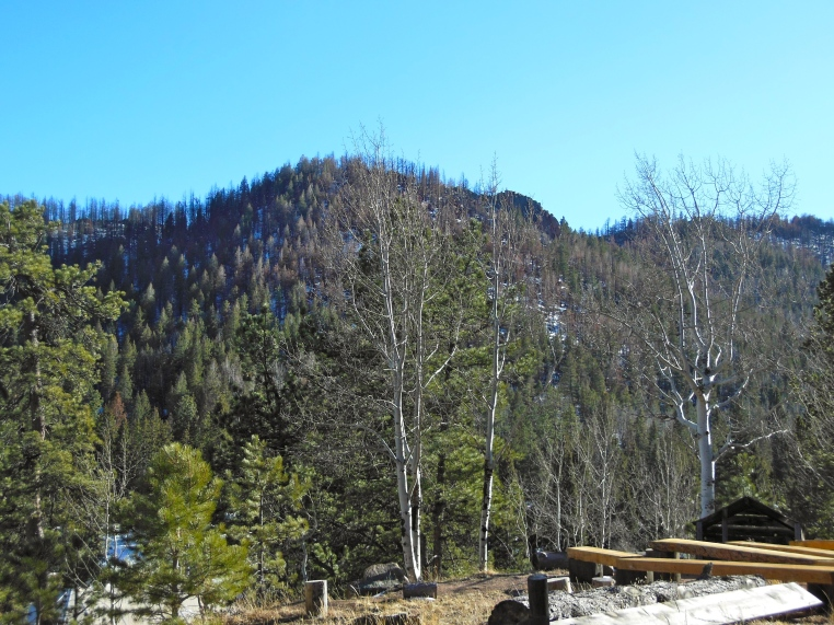 Fire Line at Eagle Lake